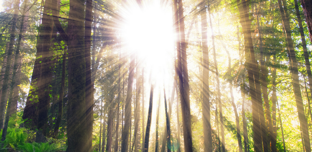real sun through forest